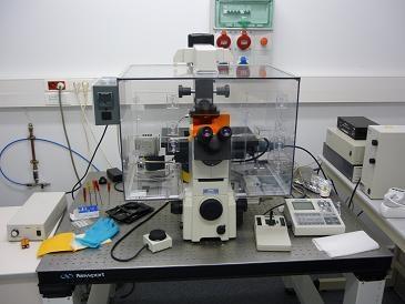 microscopi.jpg